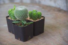 Kaktus rośliny i kopii przestrzeń Fotografia Stock