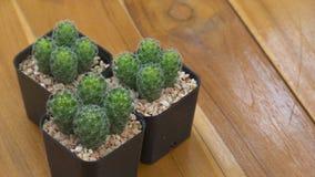 Kaktus rośliny i kopii przestrzeń Obraz Royalty Free