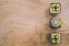 Kaktus rośliny i kopii przestrzeń Obrazy Royalty Free