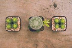 Kaktus rośliny i kopii przestrzeń Zdjęcia Royalty Free