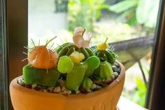 Kaktus Robić świeczki na drewnianym stole obrazy royalty free