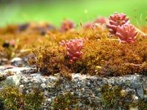 kaktus rosnącego moss razem Zdjęcia Royalty Free
