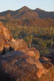 kaktus saguaro Zdjęcia Royalty Free