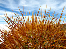 Kaktus, Salz-Ebenen, Bolivien Stockbild