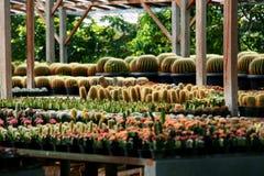 Kaktus-Serie Lizenzfreie Stockbilder