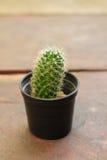 Kaktus som isoleras på brun bakgrund Royaltyfri Bild