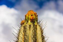 Kaktus som isoleras på moln med blå bakgrund royaltyfri fotografi