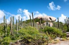 Kaktus som växer på de Ayo Rock bildande royaltyfri bild