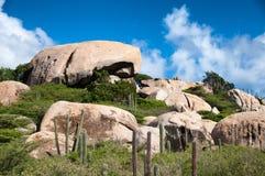 Kaktus som växer på de Ayo Rock bildande arkivfoton
