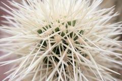 Kaktus-Spulen Lizenzfreies Stockfoto