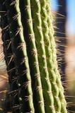 kaktus szczegół Obrazy Royalty Free