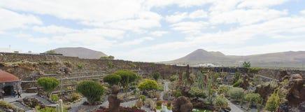 kaktus trädgårds- lanzarote Royaltyfri Bild