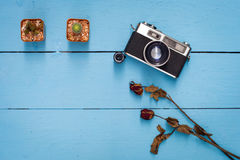 Kaktus, trocknen rosafarbene und alte Kamera stockfoto