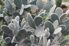 Kaktus tropisch Stockbilder