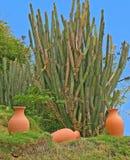Kaktus u. Tonwaren Lizenzfreie Stockfotos