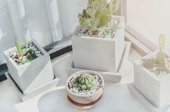 Kaktus Układający w garnkach zdjęcia stock