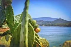 Kaktus und das Meer Stockfotografie