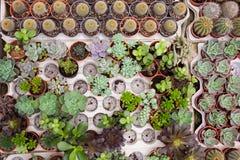 Kaktus und eine Zusammenstellung von kleinen Topfpflanzen Stockbild