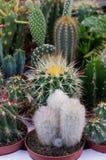 Kaktus und saftige Anlagen Stockbilder