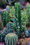 Kaktus und saftige Anlagen Stockfoto