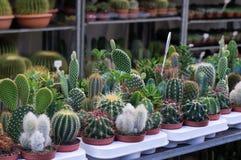 Kaktus und saftige Anlagen Stockbild
