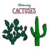 Kaktus und saftige Anlagen Blühende mexikanische Wüstenpflanzen Lizenzfreie Stockfotos