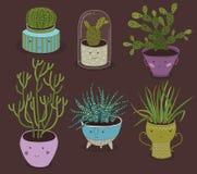 Kaktus und saftige Anlagen, die in den netten Töpfen wachsen Lizenzfreie Stockfotos