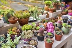 Kaktus und saftiger Anlagengarten lizenzfreie stockbilder