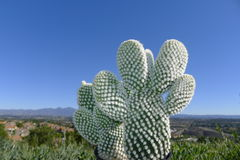 Kaktus und Santiago Peak Lizenzfreie Stockfotografie