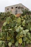 Kaktus und Schloss lizenzfreies stockbild