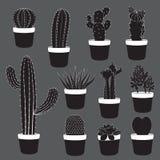 Kaktus-und Wüstenpflanzen-Sammlung Stockbilder