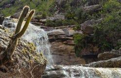 Kaktus und Wasserfall Stockfoto