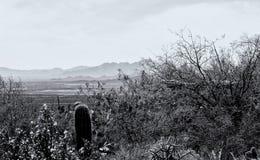 Kaktus und Widflowers im Monochrom lizenzfreies stockfoto