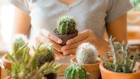 Kaktus- und Zimmerpflanzekonzept - Kaktustopfgriff durch Hände der Frau Stockbilder