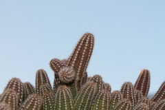 Kaktus in unserem Garten Stockfotografie