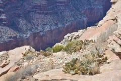 Kaktus Uroczysty jar obrazy stock
