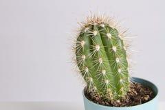 Kaktus-Vanille-Pastell-modische Farbe Stockfoto