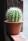 Kaktus vid fönstret Arkivbilder