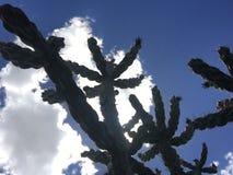 Kaktus von unterhalb Stockfotografie