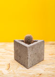 Kaktus w betonowym garnku Obrazy Royalty Free