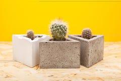 Kaktus w betonowym garnku Fotografia Royalty Free