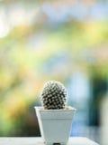 Kaktus w białym garnku na zamazanym tle z kopii przestrzenią Obraz Royalty Free