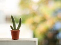 Kaktus w brown garnku na zamazanym tle z kopii przestrzenią Zdjęcie Royalty Free