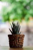 Kaktus w cobber garnku Obraz Royalty Free