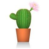Kaktus w czerwonym glinianym garnku Kwiatonośna roślina Biały tło odosobniony Realistyczny obrazek ściągania ilustracj wizerunek  Obraz Royalty Free