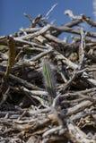 Kaktus w driftwood stosie zdjęcia stock