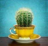 Kaktus w filiżance Obraz Royalty Free