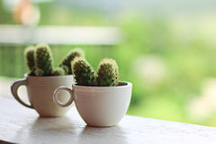 Kaktus w filiżance Zdjęcia Royalty Free