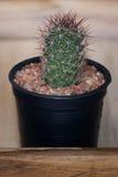 Kaktus w garnku na drewnianym pudełku Zdjęcia Royalty Free