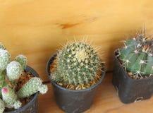Kaktus w garnku na drewnianym tle Zdjęcia Royalty Free